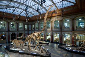 mfn_brachiosaurus_foto_antje-dittmann_mfn_01