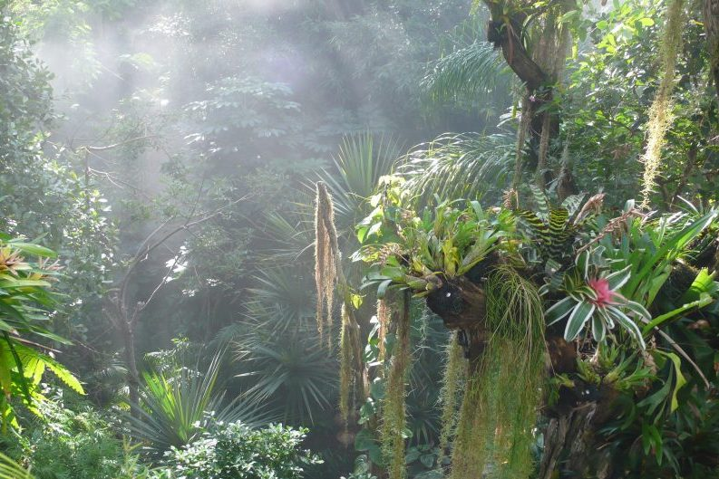 View above the jungle in Biosphere Potsdam
